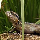 Lurking Lizard by Graham Jones