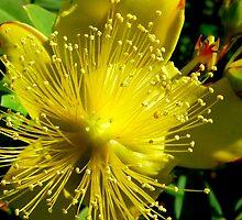 Yellow Bud! by Rinaldo Di Battista
