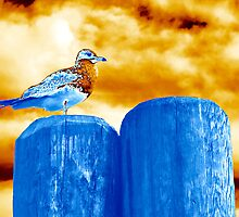 Seagull of a Another Color by joAnn lense