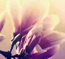 magnolia flower by aquaarte