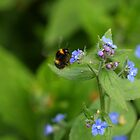 Bumblebee lunch by RFK C