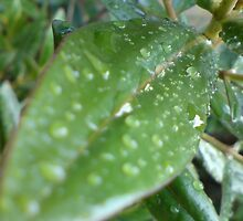 Leaves on a Rainy Day  by laurenpittard