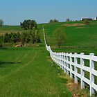 Follow the White Picket Fence by Susan Blevins
