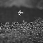 Finch Takes Off by photoshotgun