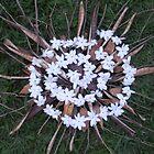 white spiral by Mirtes