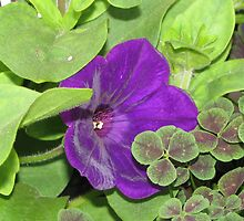 purple flower with the luck of the 4 leaf clover! by Ann Caruolo