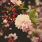 Cherry Blossom by LeilaBlake