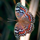 Butterfly by Ann  Palframan