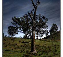 Australian Farm Paddock by PhotoButterfly