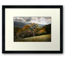 Magnificene in Oak Framed Print