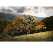 Magnificene in Oak Photographic Print