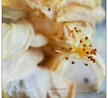 Decay of a Flower by Guillermo Mayoral