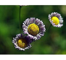 Tiny Little Weed Photographic Print