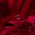 Water Droplet Flowers by Patrick Bongers