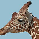 Giraffe Portrait by Robert Abraham