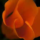 Orange glow by bettywiley