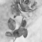 A Rose is Still a Rose... by Melody Ricketts