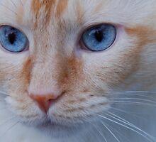 Ol' Blue Eyes by montecore827