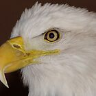 Eagle head by tcat757