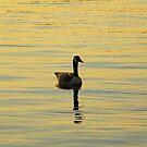 On Golden Pond by ys-eye