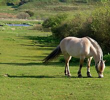 Horse on meadow by Nordlys