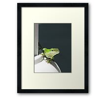 Anole Lizard Colonial Style Framed Print
