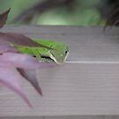 Anolis by JeffeeArt4u
