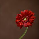 Simply Red by Adriana Glackin