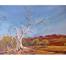 Magic tree in Flinders Ranges, South Australia Photographic Print