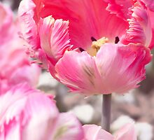 Fancy Frills Tulip by Steven Nicolaides