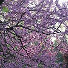 Redbud Trees by JeffeeArt4u