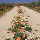 Poppy Road by CarolM