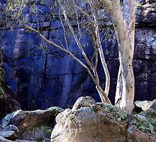 Red Gum at Barry's Falls by Fleur Stelling