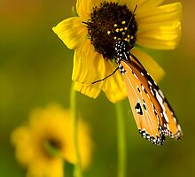 The Butterfly and Yellow Flower-Sequel#3 by Mukesh Srivastava