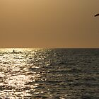 Kite Surfing at Sunset on the Gulf of Mexico by Pamela McCreight