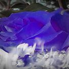The Flaming Blue Rose by Gail Bridger