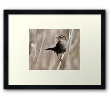 Feathery Crescent Framed Print