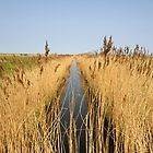 Cley marshes norfolk. by adam swaine