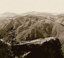 Colorado Rockies by Anita Schuler