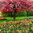 Paint Box Garden by Christine Lake