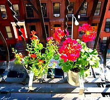 flowers on the fire escape by ShellyKay