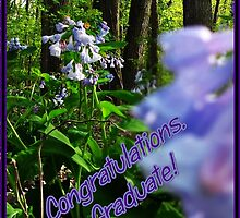 Congratulations, Graduate! by Greeting Cards by Tracy DeVore