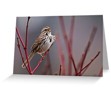Song Sparrow on Dogwood - Ottawa, Ontario Greeting Card