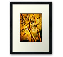 Tropics.. Heat and Old Bamboo Framed Print