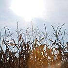 Suncrops- Farm fields by Schutte14