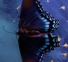 Butterfly Kisses by Ashley Hanna