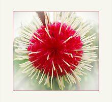 gum bloom by vampvamp