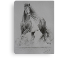 Gypsy Cob Canvas Print