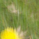 Dandelion by Lynn Wiles