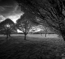Ghosts in the Park by Martin Finlayson